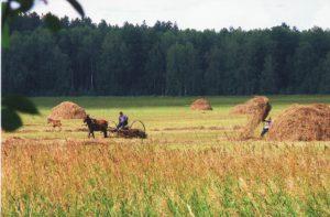 Природа Топчихинского района в объективе Георгия Эргардт