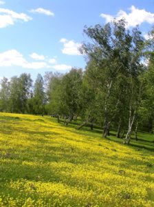 Природа Топчихинского района. Фото С.В. Поздина